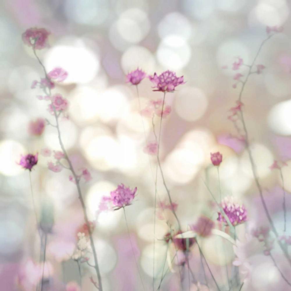 konfigurieren des Kunstdrucks in Wunschgröße Floral Meadow II von Carrigan, Kate
