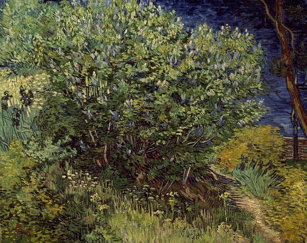 konfigurieren des Kunstdrucks in Wunschgröße Lilac Bush, 1889 von Van Gogh, Vincent