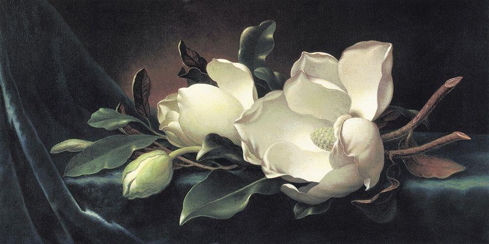 konfigurieren des Kunstdrucks in Wunschgröße Magnolia Blossom On Blue Velvet von Heade, Martin Johnson