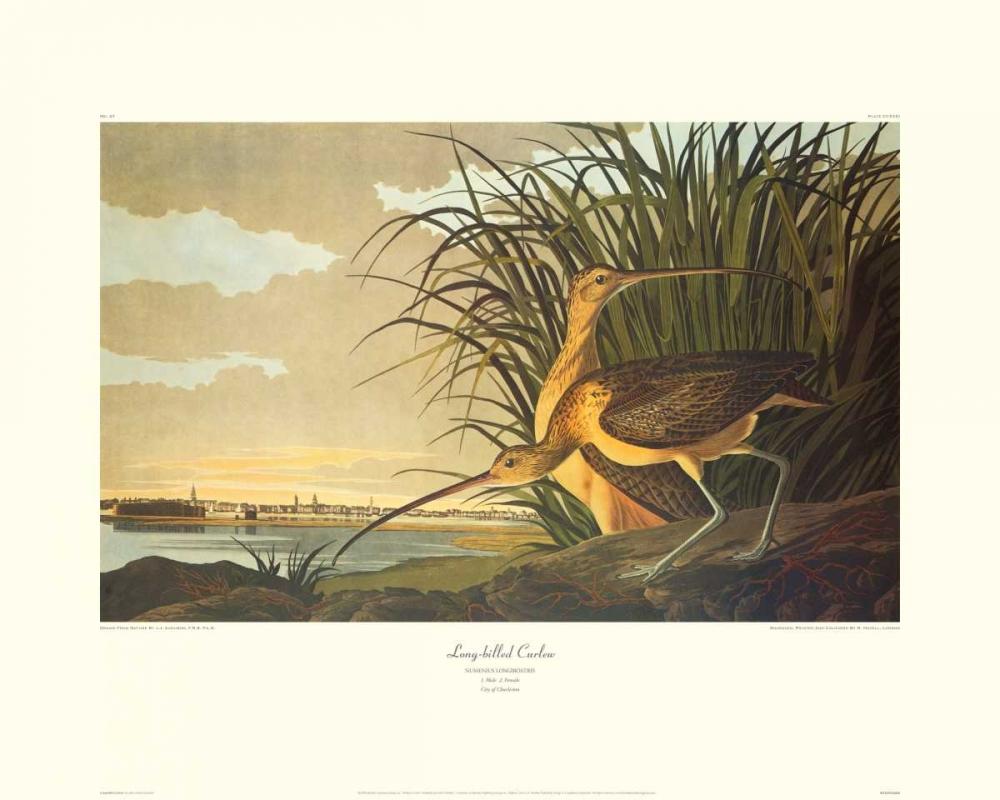 Audubon, John James