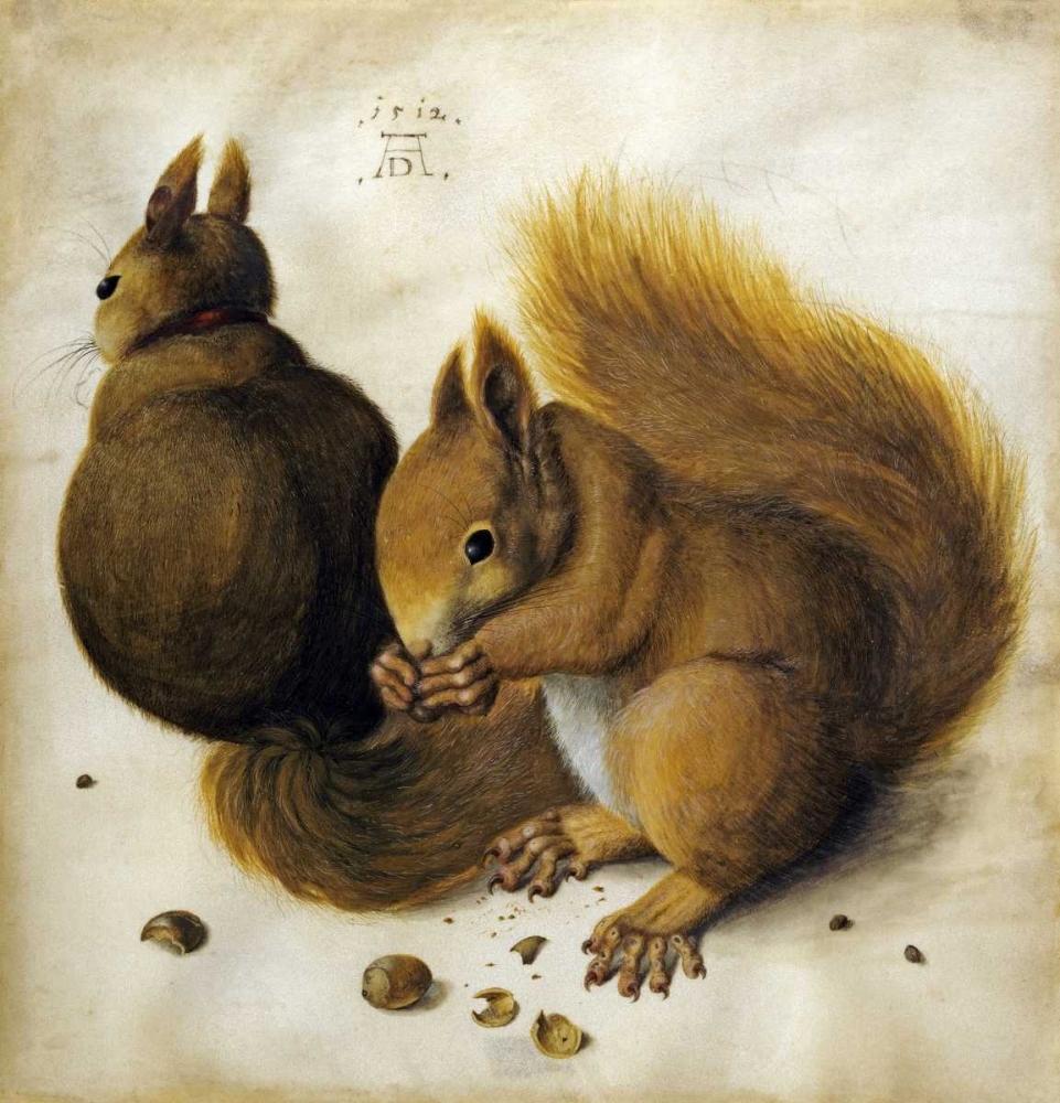 Two Squirrels, One Eating a Hazelnut von Durer, Albrecht <br> max. 76 x 81cm <br> Preis: ab 10€