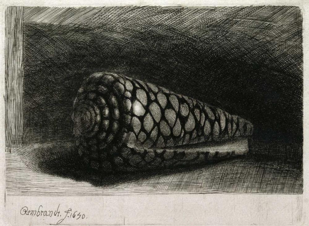 konfigurieren des Kunstdrucks in Wunschgröße The Shell - Conus Marmoreus von Rembrandt, van Rijen