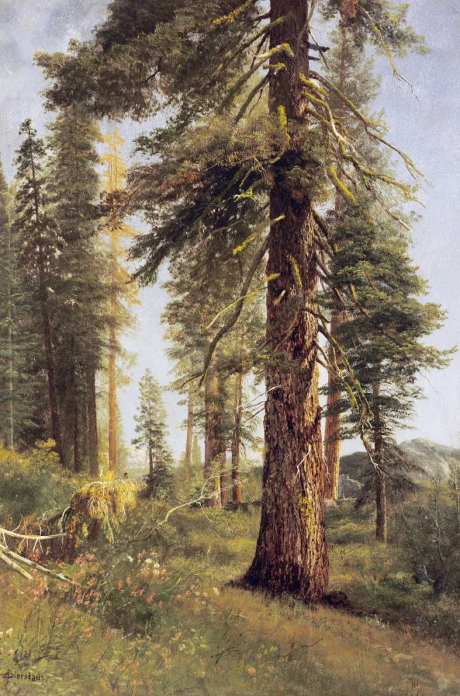 konfigurieren des Kunstdrucks in Wunschgröße California Redwoods von Bierstadt, Albert