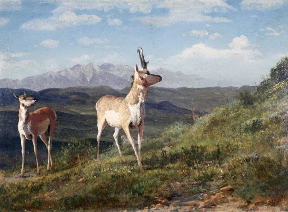 konfigurieren des Kunstdrucks in Wunschgröße Antelope von Bierstadt, Albert