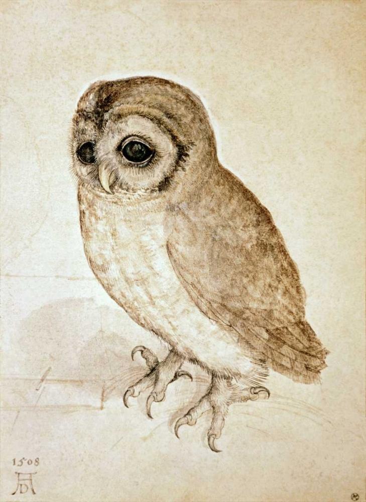 Screech Owl von Durer, Albrecht <br> max. 74 x 104cm <br> Preis: ab 10€