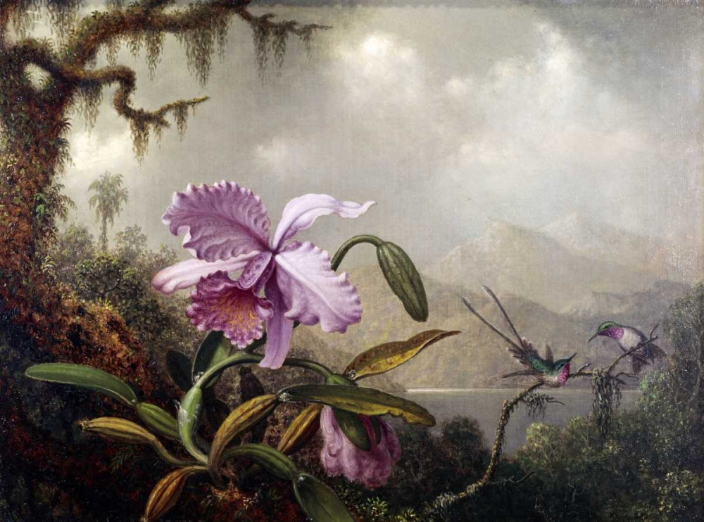 Hummingbirds and Orchids von Heade, Martin Johnson <br> max. 104 x 76cm <br> Preis: ab 10€
