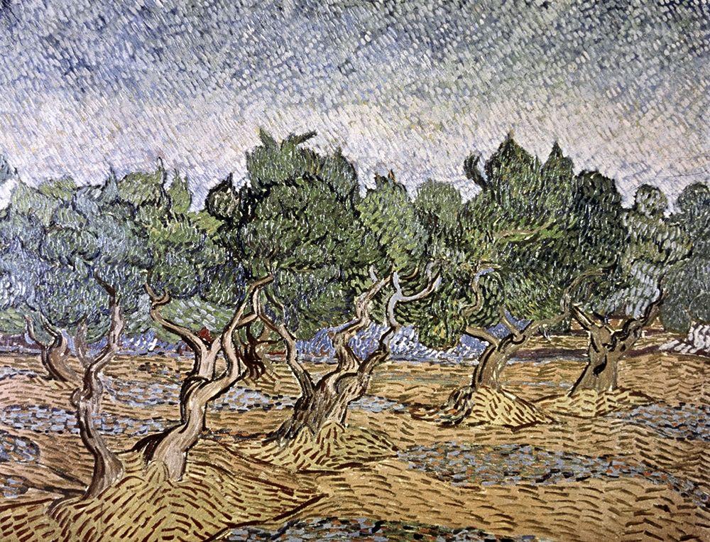 konfigurieren des Kunstdrucks in Wunschgröße Olive Orchard, Violet Soil von Van Gogh, Vincent