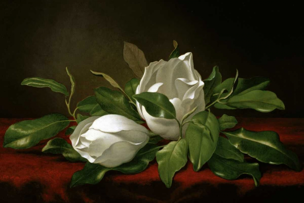 Magnolia von Heade, Martin Johnson <br> max. 107 x 71cm <br> Preis: ab 10€