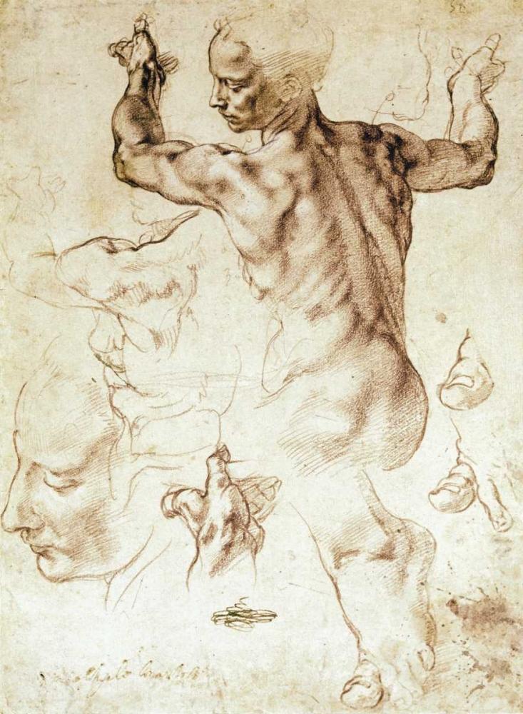 konfigurieren des Kunstdrucks in Wunschgröße Anatomy Sketches - Libyan Sibyl von Michelangelo