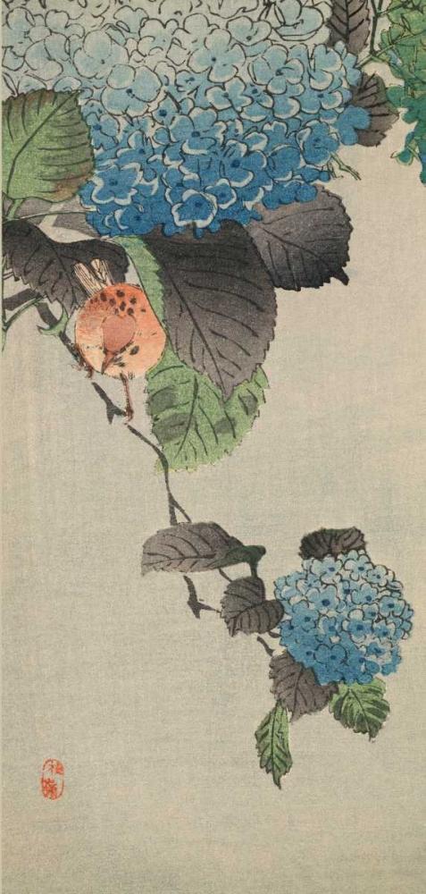 konfigurieren des Kunstdrucks in Wunschgröße Small bird and hydrangea von Unknown