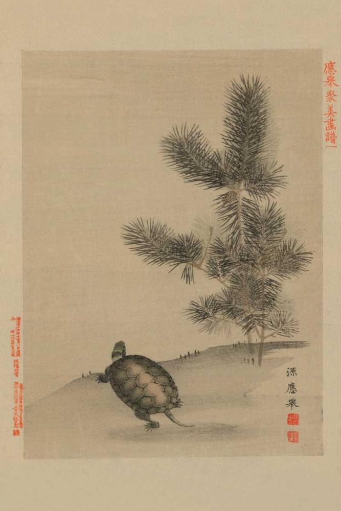 konfigurieren des Kunstdrucks in Wunschgröße Turtle von Unknown