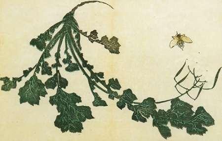 konfigurieren des Kunstdrucks in Wunschgröße Radish And Bee 1814 von Hokusai