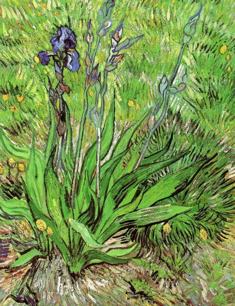 konfigurieren des Kunstdrucks in Wunschgröße The Iris von Van Gogh, Vincent