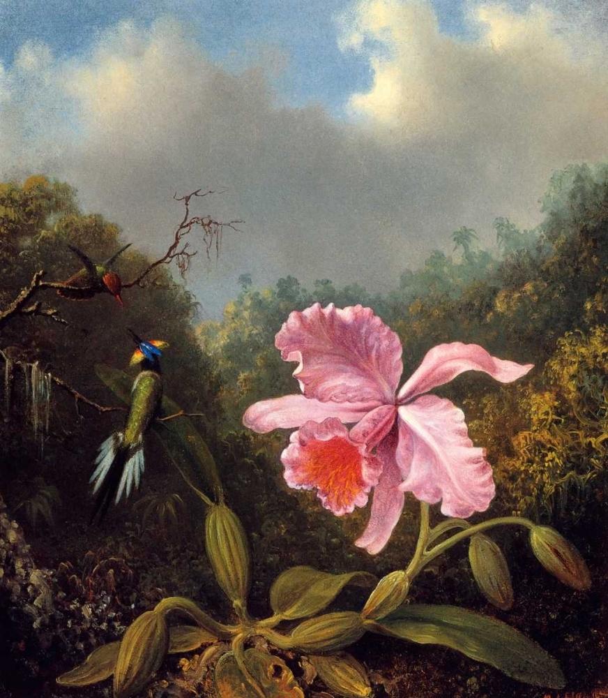 konfigurieren des Kunstdrucks in Wunschgröße Fighting Hummingbirds With Pink Orchid von Heade, Martin Johnson