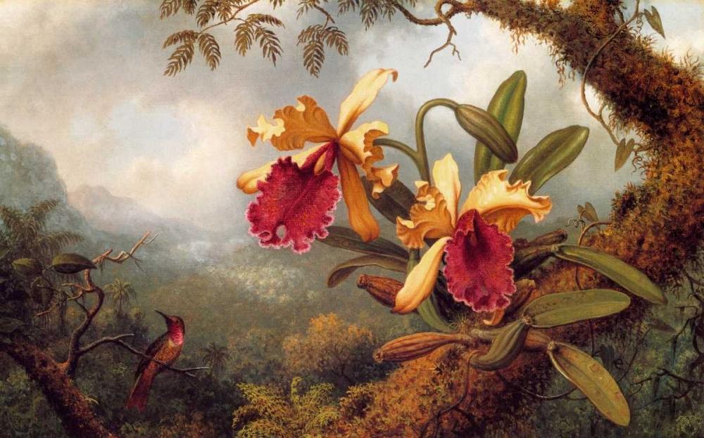 Orchids And Hummingbird von Heade, Martin Johnson <br> max. 112 x 69cm <br> Preis: ab 10€