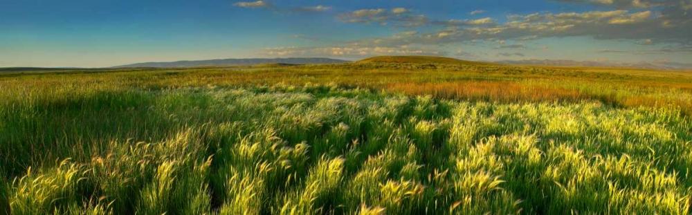 konfigurieren des Kunstdrucks in Wunschgröße Grasslands, Arapaho National Wildlife Refuge, Colorado von Fitzharris, Tim