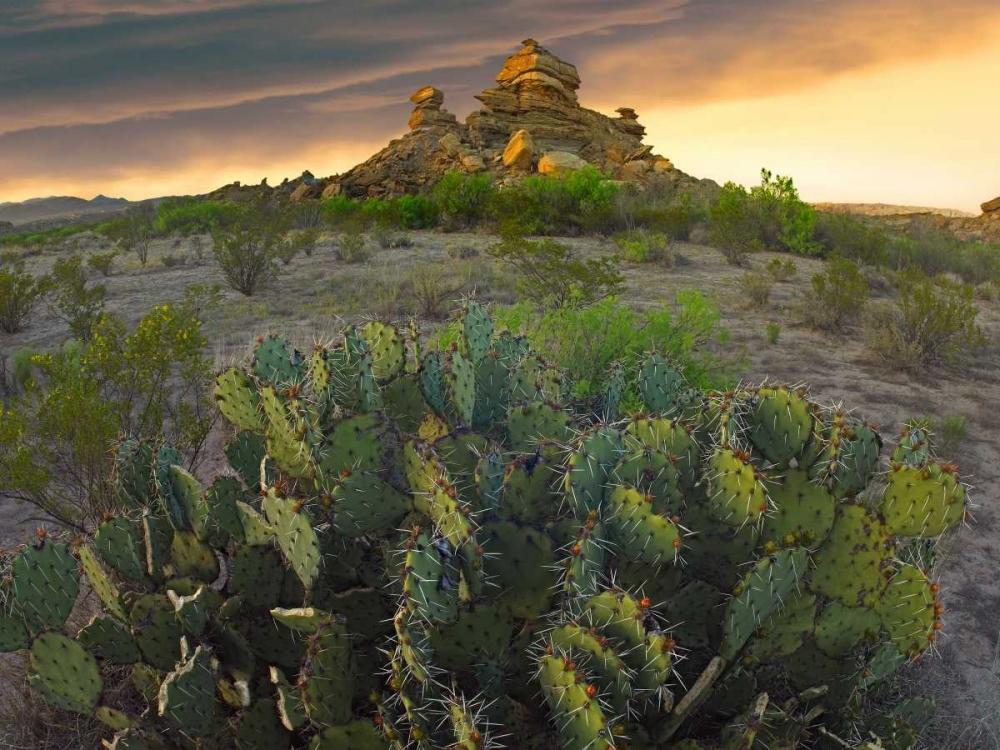 konfigurieren des Kunstdrucks in Wunschgröße Opuntia and hoodoos, Big Bend National Park, Chihuahuan Desert, Texas von Fitzharris, Tim