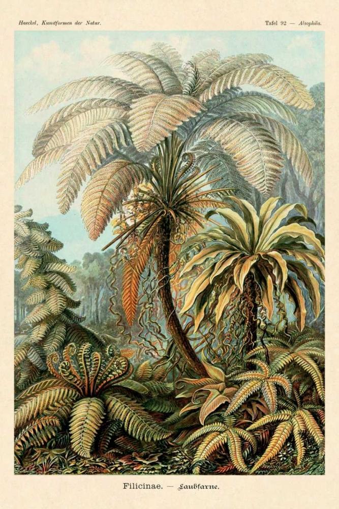 konfigurieren des Kunstdrucks in Wunschgröße Haeckel Nature Illustrations: Ferns von Haeckel, Ernst