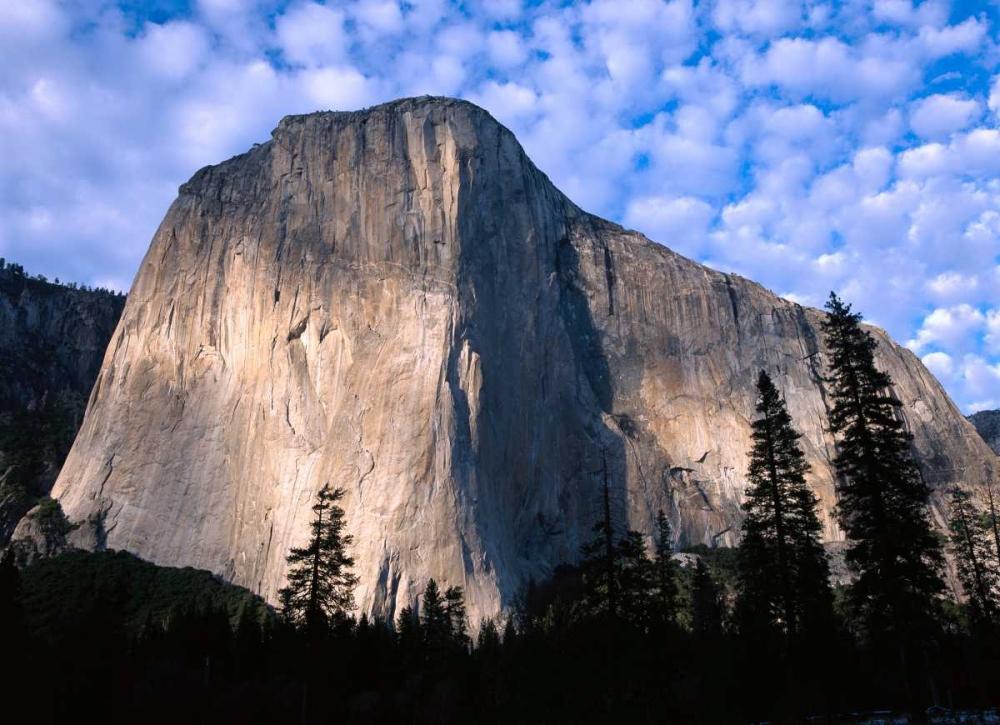 konfigurieren des Kunstdrucks in Wunschgröße El Capitan rising over the forest, Yosemite National Park, California von Fitzharris, Tim