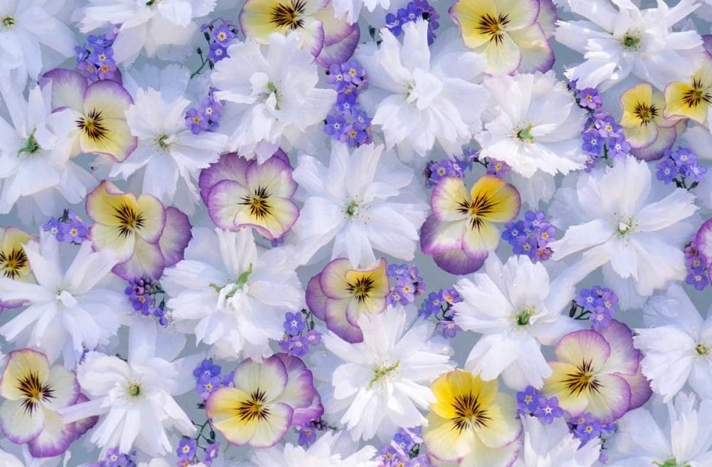 konfigurieren des Kunstdrucks in Wunschgröße Close up of white and purple flower arrangement von Vermeer, Jan