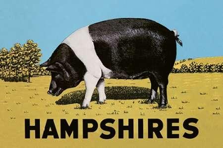 konfigurieren des Kunstdrucks in Wunschgröße Pigs and Pork: Hampshires von Advertisement