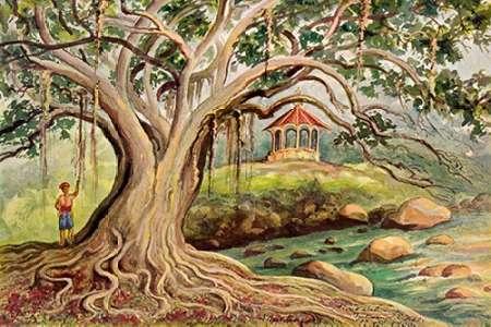 konfigurieren des Kunstdrucks in Wunschgröße Gummibaum auf Java Ficus elastica in Buitenzorg von Haeckel, Ernst