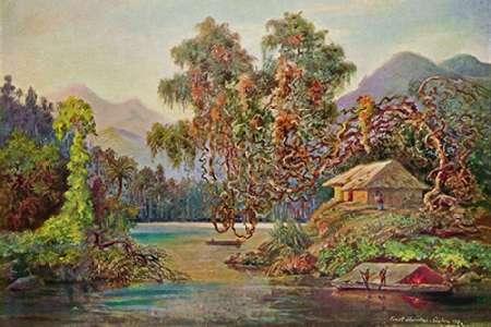konfigurieren des Kunstdrucks in Wunschgröße Aralien mit Lianen am Schwarzen Flusse (Ceylon) von Haeckel, Ernst