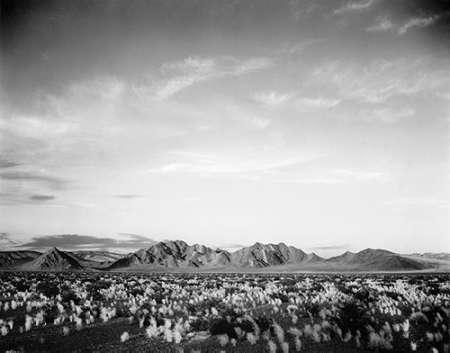 konfigurieren des Kunstdrucks in Wunschgröße Distant mountains: desert and shrubs in foreground near Death Valley National Monument, California - von Adams, Ansel