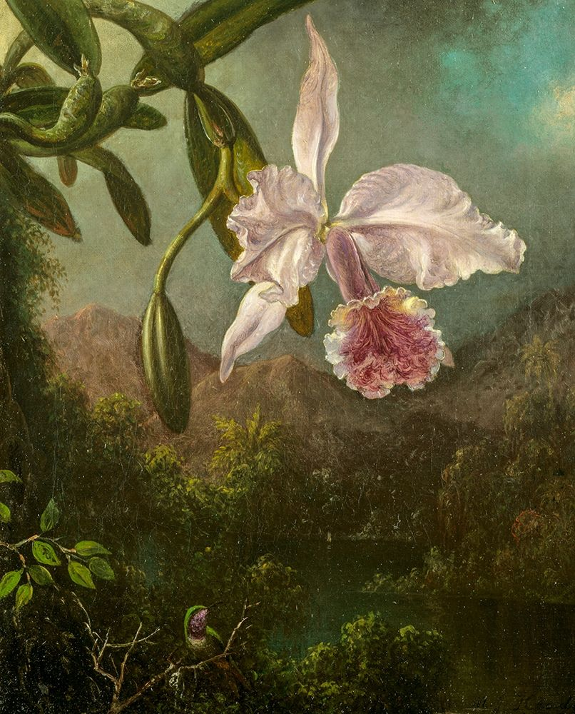 konfigurieren des Kunstdrucks in Wunschgröße Orchid Blossoms von Heade, Martin Johnson