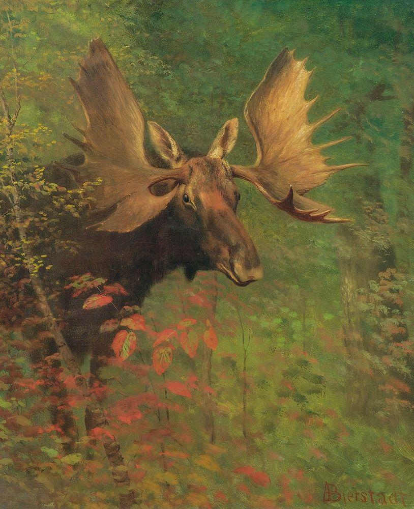 konfigurieren des Kunstdrucks in Wunschgröße Study of a moose von Bierstadt, Albert