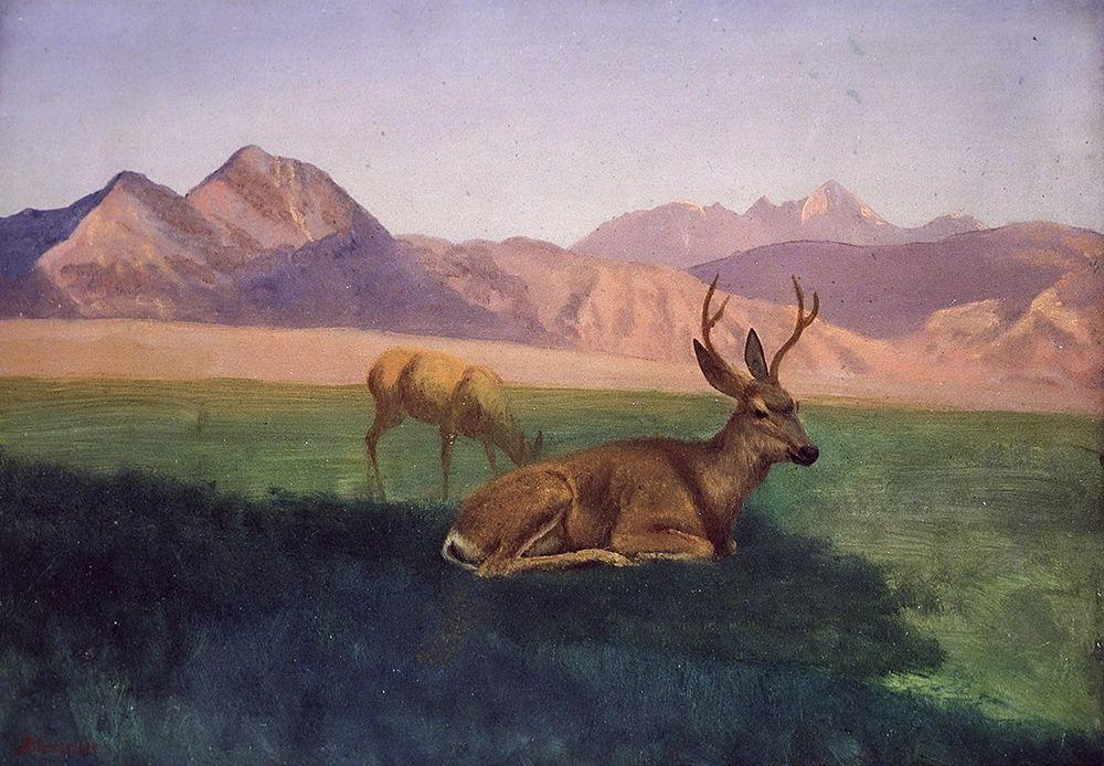 konfigurieren des Kunstdrucks in Wunschgröße Deer von Bierstadt, Albert