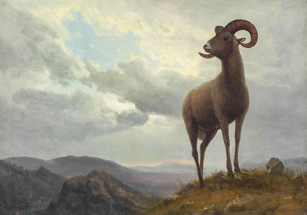 konfigurieren des Kunstdrucks in Wunschgröße Long Horned Sheep von Bierstadt, Albert