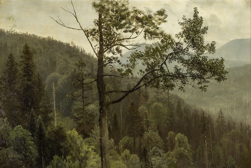 konfigurieren des Kunstdrucks in Wunschgröße Tree covered mountains von Bierstadt, Albert