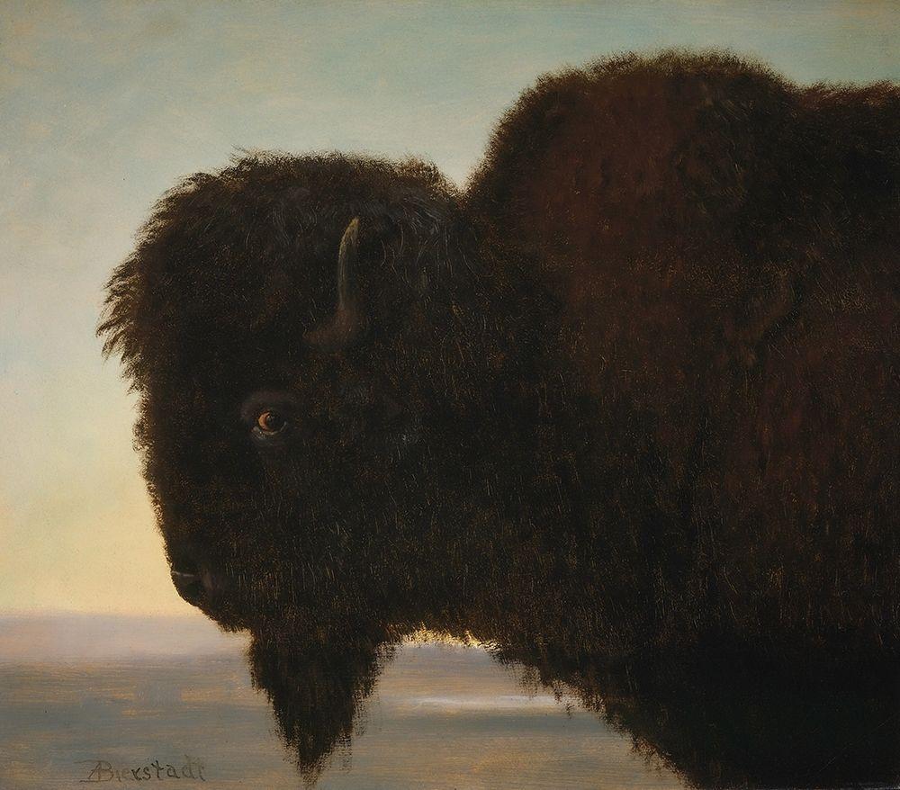 konfigurieren des Kunstdrucks in Wunschgröße Buffalo Head von Bierstadt, Albert
