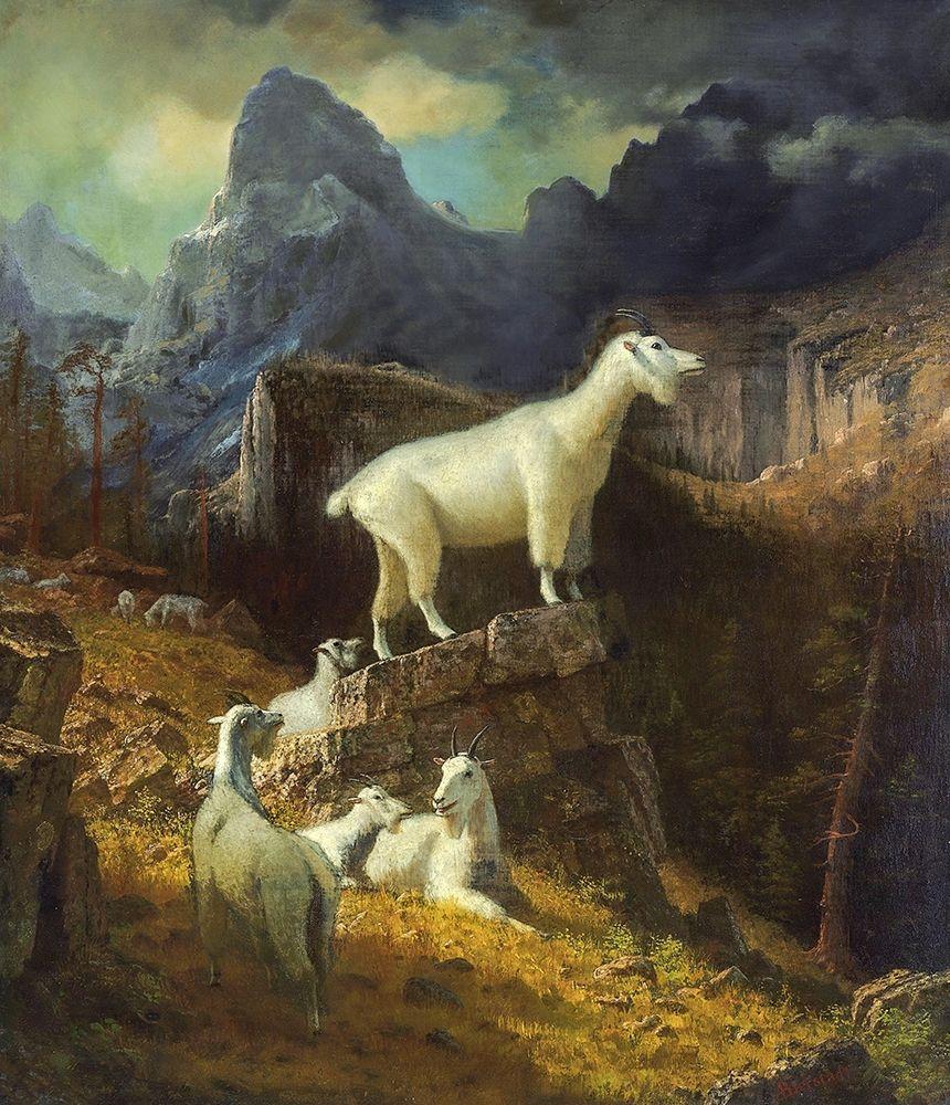 konfigurieren des Kunstdrucks in Wunschgröße Rocky Mountain Goats von Bierstadt, Albert
