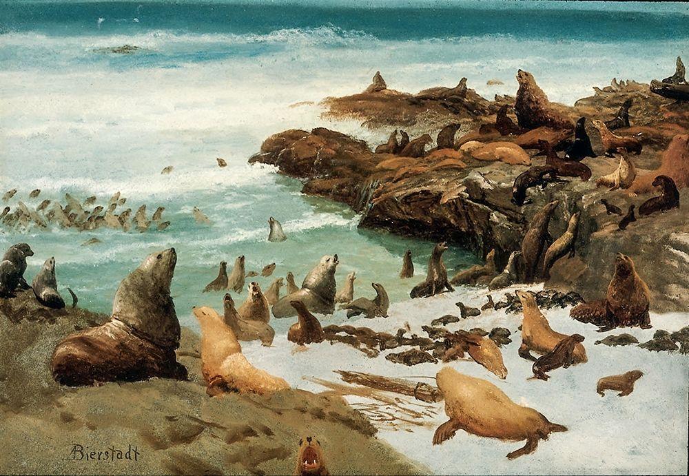 konfigurieren des Kunstdrucks in Wunschgröße Seal Rocks, Farallons von Bierstadt, Albert