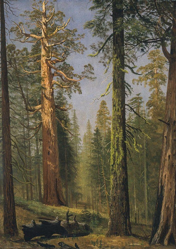 konfigurieren des Kunstdrucks in Wunschgröße The Grizzly Giant Sequoia, Mariposa Grove, California von Bierstadt, Albert