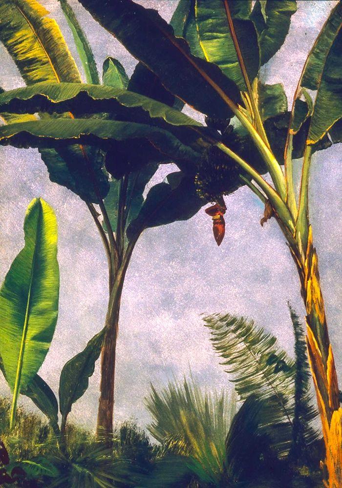 konfigurieren des Kunstdrucks in Wunschgröße Banana Trees von Bierstadt, Albert