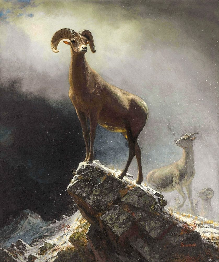 konfigurieren des Kunstdrucks in Wunschgröße Rocky Mountain Sheep or Big Horn, Ovis, Montana von Bierstadt, Albert