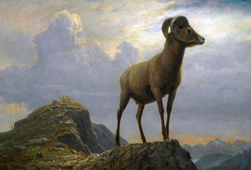 konfigurieren des Kunstdrucks in Wunschgröße Study of a Bighorn Ram von Bierstadt, Albert