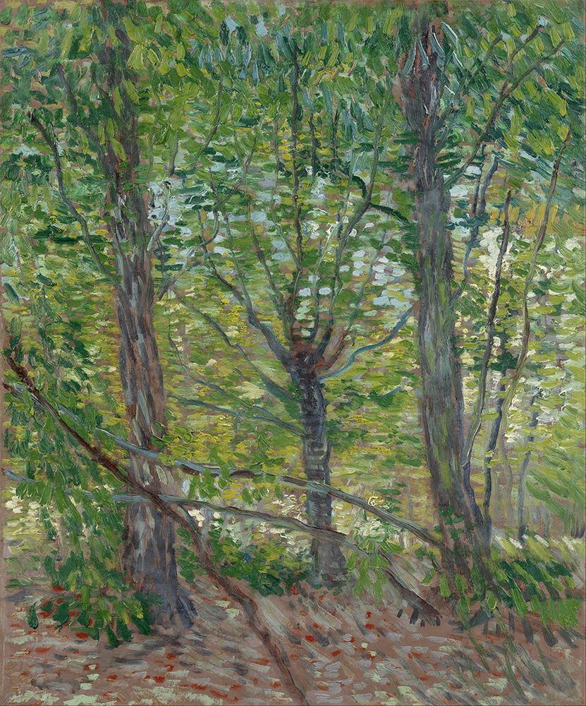 konfigurieren des Kunstdrucks in Wunschgröße Trees von Van Gogh, Vincent