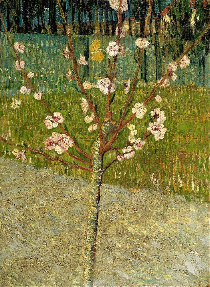 konfigurieren des Kunstdrucks in Wunschgröße Almond tree in blossom von Van Gogh, Vincent