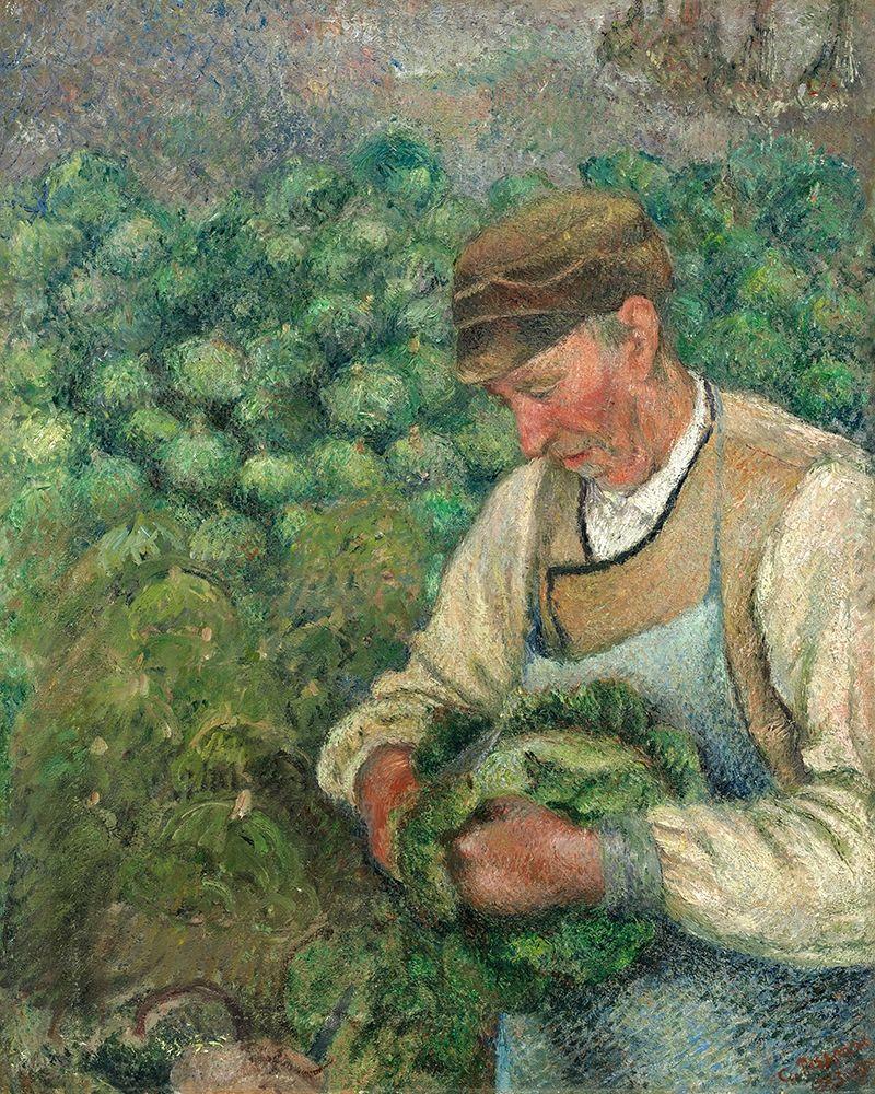 konfigurieren des Kunstdrucks in Wunschgröße The Gardener - Old Peasant with Cabbage von Pissarro, Camille