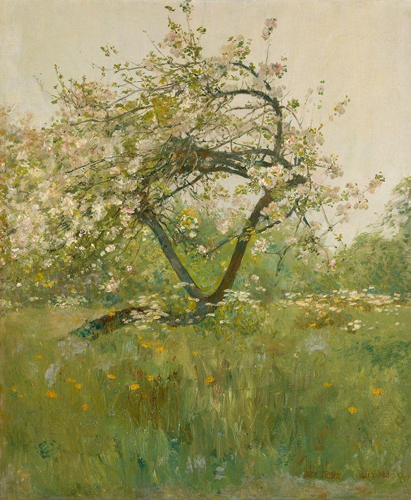 konfigurieren des Kunstdrucks in Wunschgröße Peach Blossoms Villiers le Bel von Hassam, Childe