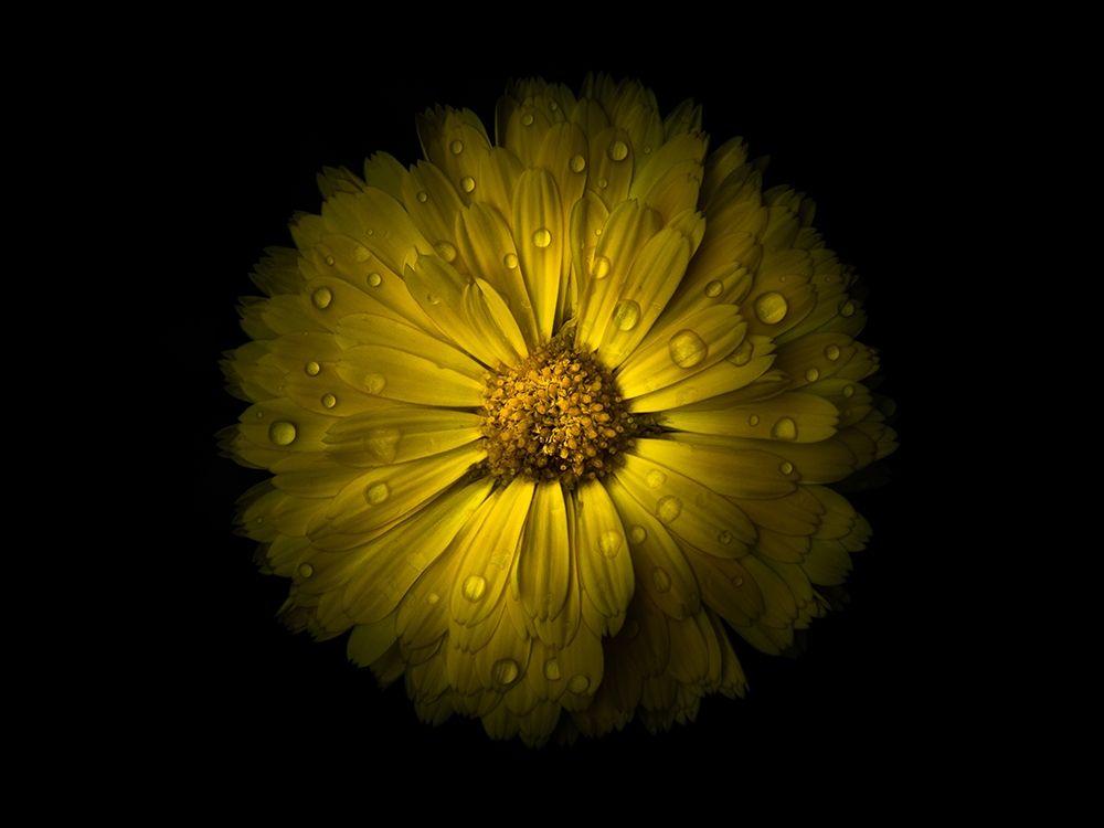 konfigurieren des Kunstdrucks in Wunschgröße Backyard Flowers Yellow 10 von Carson, Brian
