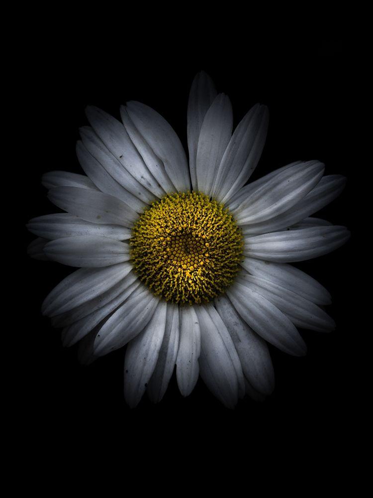 konfigurieren des Kunstdrucks in Wunschgröße Backyard Flowers White 13 von Carson, Brian