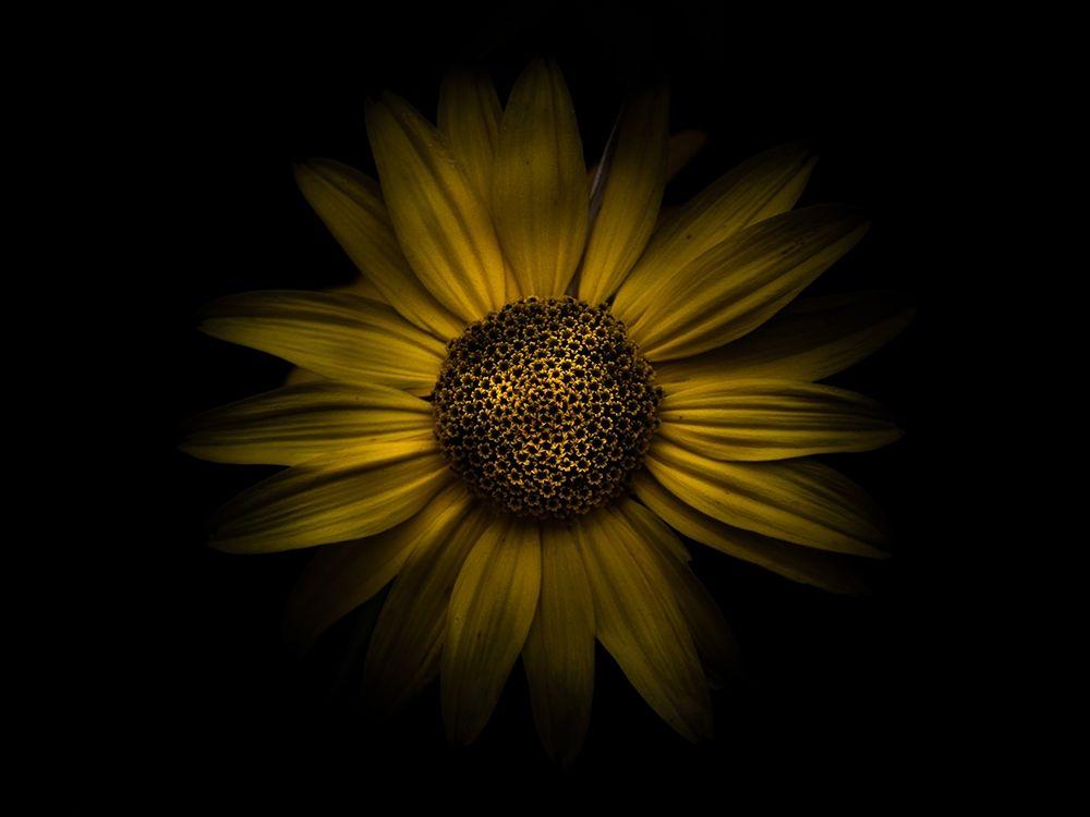 konfigurieren des Kunstdrucks in Wunschgröße Backyard Flowers Yellow 18 von Carson, Brian
