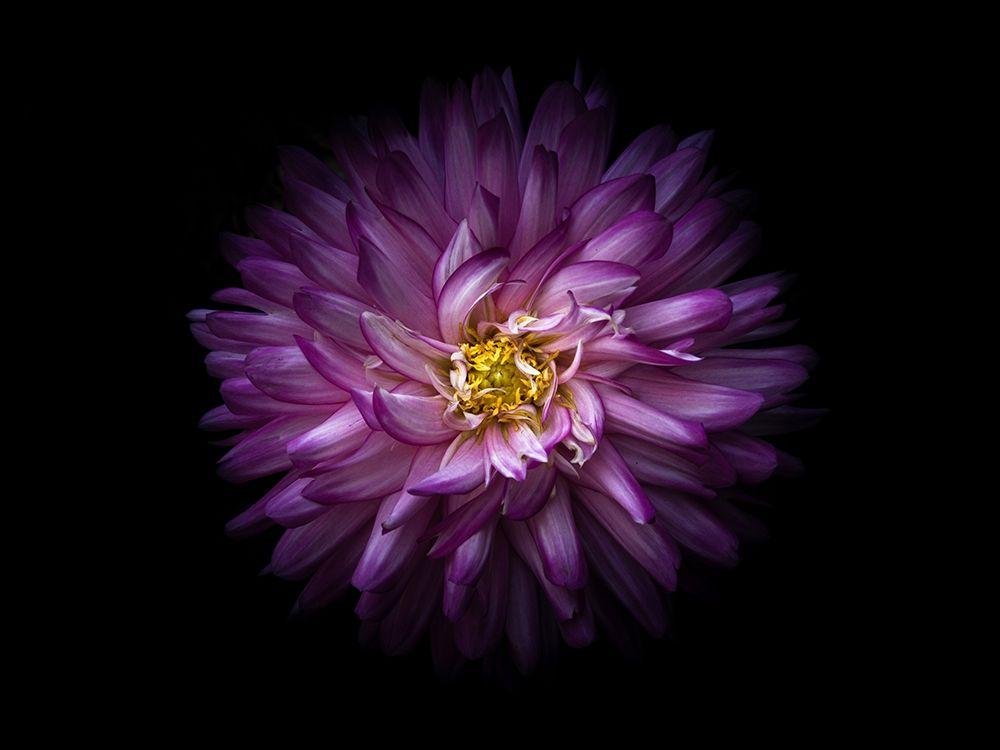 konfigurieren des Kunstdrucks in Wunschgröße Backyard Flowers Purple 20 von Carson, Brian