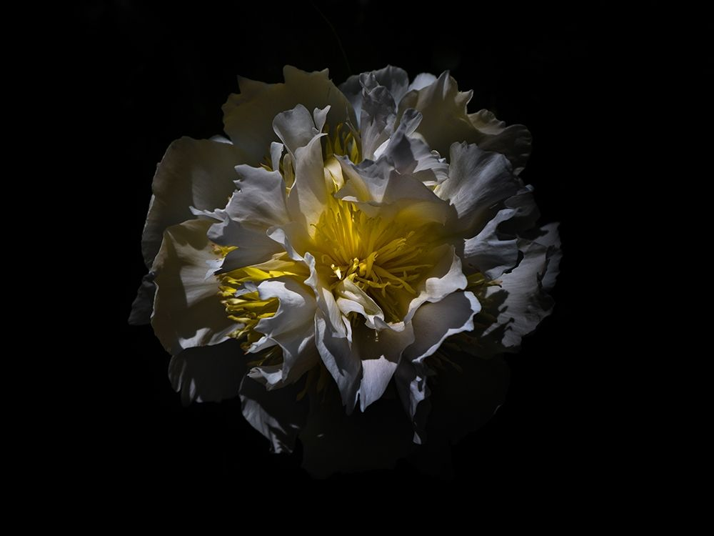 konfigurieren des Kunstdrucks in Wunschgröße Backyard Flowers White 25 von Carson, Brian