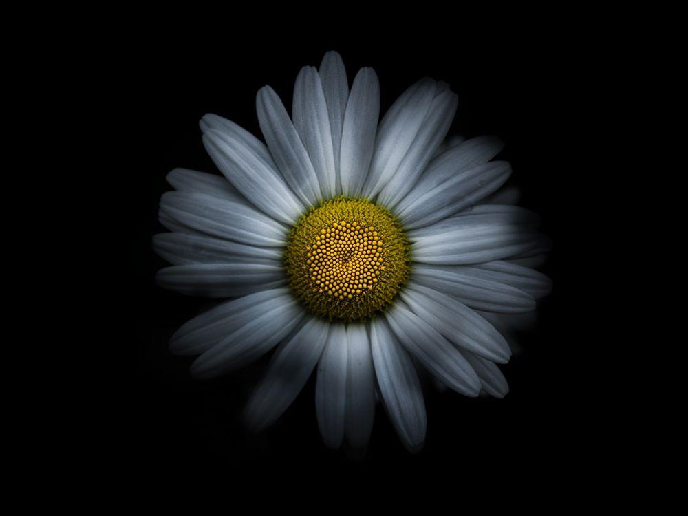 konfigurieren des Kunstdrucks in Wunschgröße Backyard Flowers White 31 von Carson, Brian